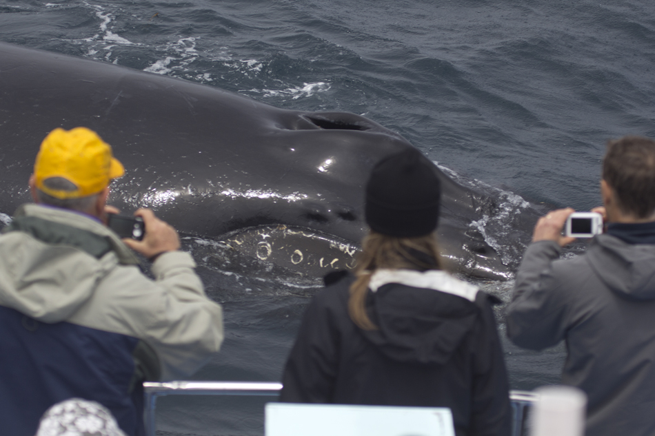 Friendly humpback crosses the stern. Photo: Sack. 05-16-2013.