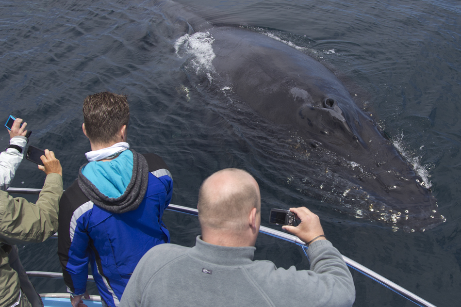 Friendly Humpback Whale