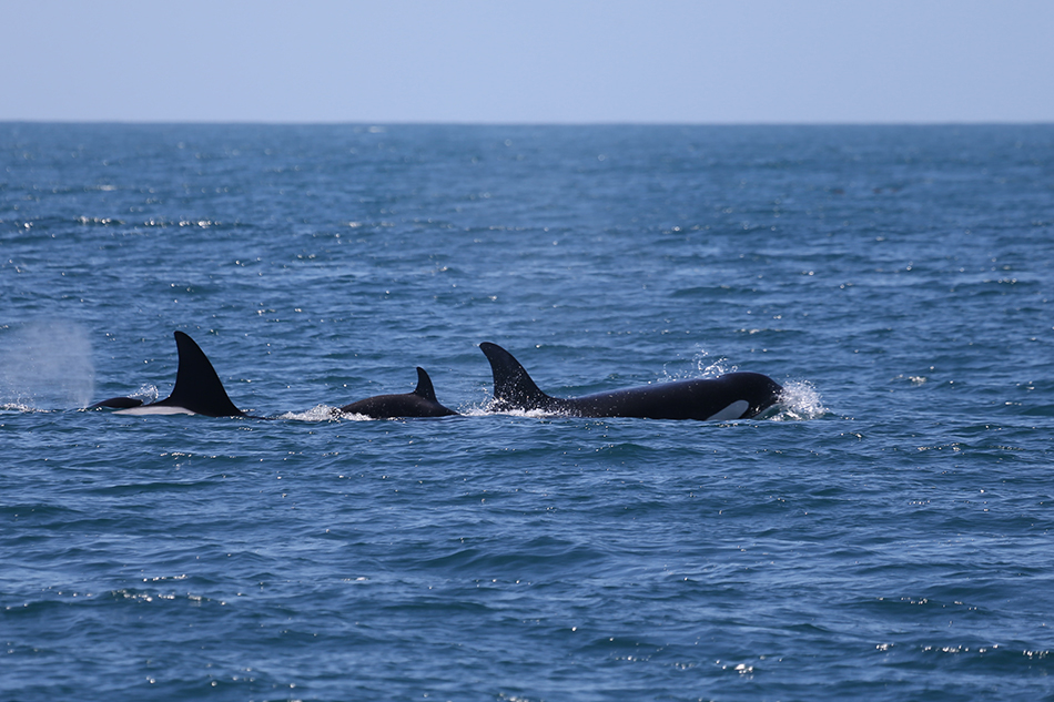 Moss Landing Whale Watching